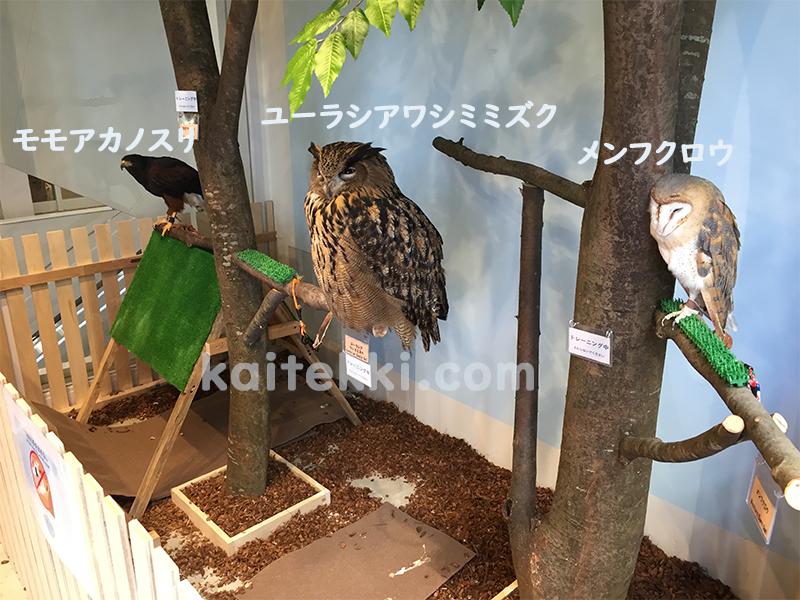 モフアニマルカフェ福岡のフクロウなど猛禽類
