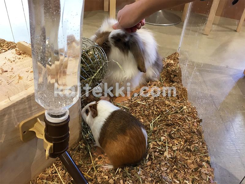 モフアニマルカフェ福岡の小動物コーナー