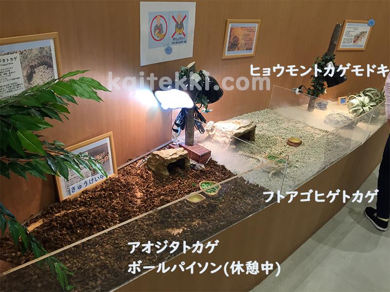 モフアニマルカフェ福岡の爬虫類コーナー